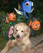 Finding Dory Dog Homemade Costume