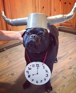 Creative costume ideas for dogs: Flavor Flav Costume