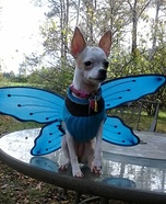 Creative costume ideas for dogs: Fly Away Costume