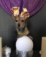 Fortune Teller Dog Costume