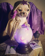 Fortune Teller Gypsy Dog Homemade Costume