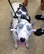 Creative costume ideas for dogs: Frankenstein Costume for Dogs