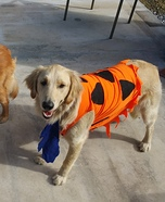 Fred and Wilma Dogs Homemade Costume