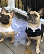 Frenchie Bride and Groom Homemade Costume