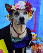 Frida Kahlo Dog Homemade Costume
