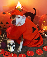 Friendly Pumpkin Dog Homemade Costume