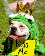 Creative costume ideas for dogs: Frog Prince Costume