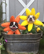 Creative costume ideas for dogs: Funny Flowers