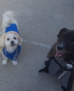 Game of Thrones - Team Targaryen Dogs Homemade Costume