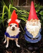 Garden Gnome Dog Homemade Costume