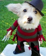 Creative costume ideas for dogs: Homemade Freddy Krueger Costume for Dogs