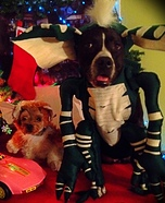 Creative costume ideas for dogs: Gizmo & Stripe from Gremlins