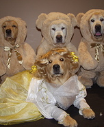 Goldilocks and the Three Bears Dogs Homemade Costume