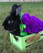 Grapes for Sale Homemade Costume
