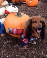 Creative costume ideas for dogs: The Great Pumpkin Harvest