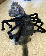 Griffin the Spooky Spider Homemade Costume