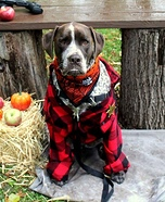 Grumpy Sheriff Dog Homemade Costume