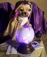 Gypsy Fortune Teller Dog Homemade Costume