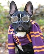 Hairy Potter Homemade Costume