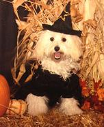 Halloween Wizard Costume