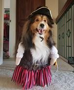 Happy Sheltie Pirate Homemade Costume