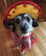 Harley O'Lay Dog Costume