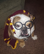 Harry Pawter Homemade Costume