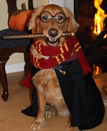 Easy DIY Harry Potter Dog Costume
