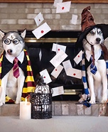 Harry Potter Dogs Homemade Costume
