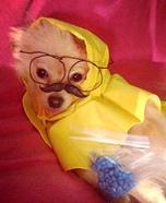 Heisendog Homemade Costume