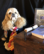Hermione Granger Dog Homemade Costume