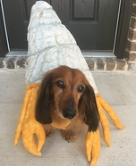 Hermit Crab Homemade Costume
