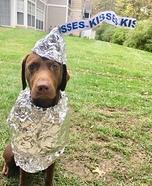 Hershey Chocolate Kiss Dog Homemade Costume
