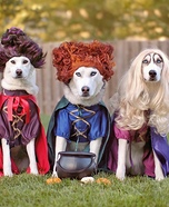 Hocus Pocus Dogs Homemade Costume