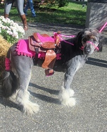 Horse Pony Dog Homemade Costume