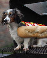 HotDog Dog Homemade Costume
