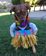 Hula Girl AbbyMango Dog Homemade Costume