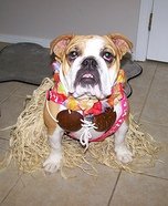 Hula Girl Dog Homemade Costume