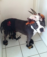 Homemade Indian Chief Costume for Dogs