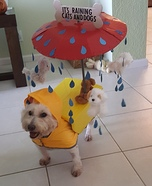 It's Raining Cats and Dogs Homemade Costume