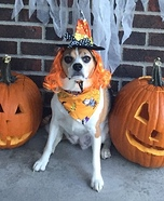 It's the Great Pumpkin Charlie Brown Dog Costume