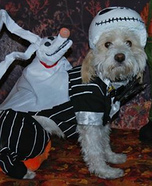 Jack Skellington Dog Homemade Costume
