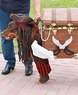 Creative costume ideas for dogs: Jack Sparrow with his Pirate Helper Costume