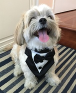 James Bond the Shih Tzu Homemade Costume