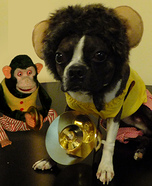 Homemade Jolly Chimp Costume