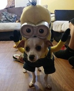 Kevin Minion Dog's Homemade Costume