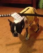 Creative costume ideas for dogs: Kill Bill Movie Black Mamba Dog's Costume
