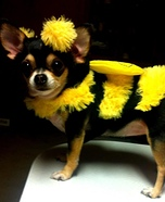 Killer Bee Costume for Dogs