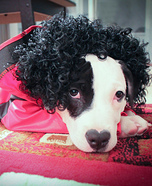 King of Pop Costume for Dogs