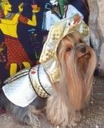 King Tut Dog Homemade Costume